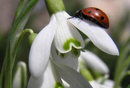 Už je tu jaro ….